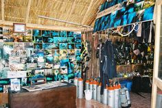 OS OJOS SCUBA Dive Shop is located at the main entrance of cenotes Dos Ojos on Highway 307 about 6 miles km) south of Akumal or 10 miles km) north of Tulum. Scuba Dive Shop, Scuba Diving, Cave Diving, Main Entrance, Riviera Maya, Tulum, Style, Dive Store, Diving
