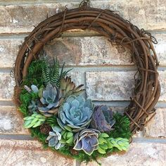 "10 ""Lively Succulent Wreath (Made to Live juicy wreath made to orderNo wish . Have you already made your perfect succulent wreath? Succulent Landscaping, Succulent Gardening, Succulent Terrarium, Succulents Garden, Succulent Outdoor, Outdoor Plants, Indoor Outdoor, Purple Succulents, Hanging Succulents"