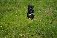 Gårdstunet Hundepensjonat: En deilig dag med blide hunder!