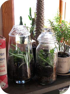How to make a terrarium. I've always liked them. Nice to see them making a comeback!