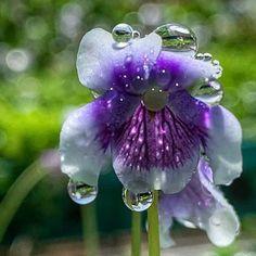 Still Life Flowers, Bloom, Instagram