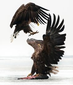 The War Eagles. ..These guys are NOT messing around
