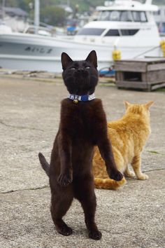 Excuse me, sir. My friend and I are keen to go on a cruise. Do you have room for two aboard your yacht?