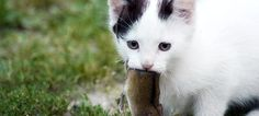You probably don't know your cat as well as you think you do. According to a recent survey of cat owners in the UK, most people are pretty clueless about their cats' lives.