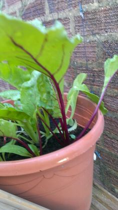 Our Beetroot