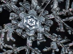 Another lovely: snowflake macro photography by Don Komarechka