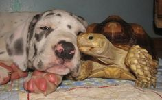 15 Of The Most Adorable Interspecies Animal Friendships In The ...