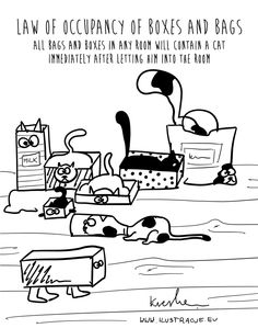 law of cats