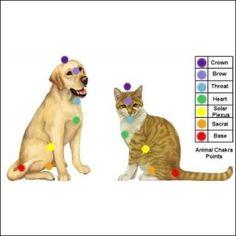 Chakra points for your pets. Reiki Chakra, Chakra Healing, Healing Crystals, Healing Stones, 7 Chakras, Chakra Gorge, Animal Consciousness, Reiki Therapy, Massage Therapy