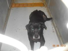 FOUND DOGS...SEE LIST>>> (click picture to see all dogs at shelter)... LORAIN COUNTY DOG KENNEL ELYRIA, OHIO http://www.petfinder.com/pet-search?shelterid=OH254 ALSO ADOPTABLE!!! PLEASE REPIN!!!