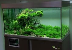 "plce winner @ ""The Art of Planted Aquarium"" by Oleg Foht. Pin by Aqua… Aquascaping, Aquarium Aquascape, Planted Aquarium, Aquarium Terrarium, Nature Aquarium, Tropical Aquarium, Saltwater Aquarium, Freshwater Aquarium, Tropical Fish"