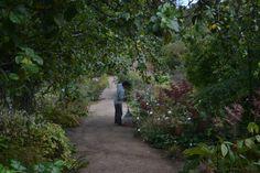 Woodland edge under the apple trees.