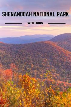 From hiking to planning your adventure & where to stay, this handy guide is EVERYTHING you need to know about visiting Shenandoah National Park with Kids. Best Places To Camp, Places To See, Family Road Trips, Family Travel, Family Vacations, Shenandoah National Park, Shenandoah Valley, Hiking With Kids, Adventure Activities