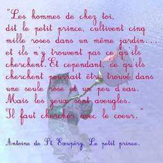 Antoine de Saint Exupéry - Le petit prince