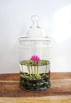 RESERVED winzige Rosa Lotus Water Lily Terrarium von MissMossGifts