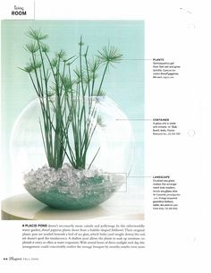I positively ADORE this aquatic terrarium. The dwarf papyrus looks very cool popping out the top of the container. (Originally from Blueprint magazine, which has woefully gone the way of the do-do bird.)