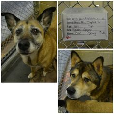 I believe this is the same 'BEAR' listed on DOGS IN DANGER - With **2 DAYS LEFT TO LIVE** 12/12/14   HOPING FOR THEM BOTH !! I left note on their fb page 2 days ago & haven't heard back :(   Washington County, TN Animal Shelter https://www.facebook.com/110453348152/photos/pb.110453348152.-2207520000.1418276386./10152607413663153/?type=3&theater  http://www.dogsindanger.com/dog.jsp?did=1413115232896