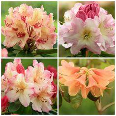 Turen til Samsø maj 2017 Partial Shade Plants, Maj, Rose, Flowers, Pink, Roses, Royal Icing Flowers, Flower, Florals