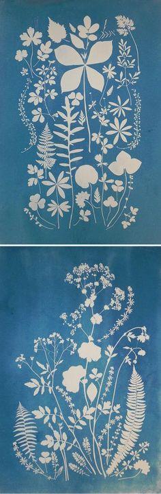 cyanotypes by anna maria bellmann