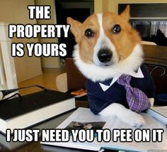 Lawyer dog   # Pin++ for Pinterest #