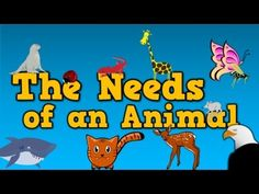 The Needs of an Animal (song for kids about 4 things animals need to survive) - Colorful Dreams Kindergarten Nursery First Grade Science, Primary Science, Kindergarten Science, Elementary Science, Science Classroom, Teaching Science, Harry Kindergarten, Preschool Songs, Classroom Teacher
