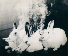 Mask for Rabbits to Smoke Cigarettes Tobacco Industry, Smoking Kills, Stop Smoke, Like Animals, Try Harder, Psychedelic Art, Hare, Cow, Beast