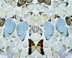 Sympathy in White Major – Absolution II Damien Hirst