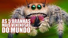 As 5 aranhas mais venenosas do mundo - Diário do Curioso