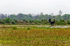 Parsa Wildlife Reserve ~ Nepal Travel Book