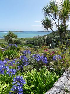 Martin's, Isles of SCILLY. I love these peaceful, wild and beautiful , semi tropical islands so much. Beautiful World, Beautiful Places, Beautiful Islands, Scilly Island, Places To Travel, Places To Go, St Martin, Coastal Gardens, Devon And Cornwall