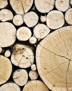 Wood, tree, bark, firewood,