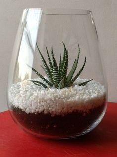 Terrarium ouvert faire soi m me avec plante jardins d for Mini fausse plante