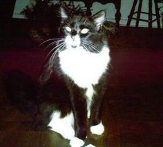 This is my wonderful cat that I lost some time ago.