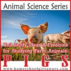 Animal Science Series: Unit Study Ideas and Freebies for Studying Farm Animals: PIGS!!!