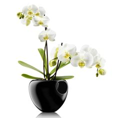 Eva Solo Orchid Pot, A self-watering orchid pot that provides just the right growing conditions for orchids. Thanks to a nylon wick in the base of the pot, the plant can draw up the water it needs. Made of glazed faience. Orchid Vase, Orchid Planters, Orchid Pot, Orchid Centerpieces, Phalaenopsis Orchid, Orchids In Water, Water Flowers, White Orchids, Ikebana