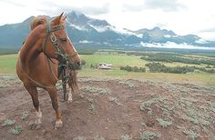 My Husband and I are trying to see if we can fit in horsebackriding during our Alaska Honeymoon this year
