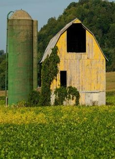 Green Silo & Yellow Barn by LiveLoveLaughMyLife