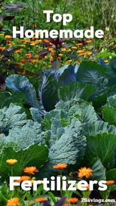 Top Homemade fertilizers for plants. #homemade #fertilizer #plants #growing Homemade Plant Fertilizer, Home Made Fertilizer, Lawn Fertilizer, Fertilizer For Plants, Greenhouse Growing, Greenhouse Ideas, Greenhouse Gardening, Vegetable Gardening, Container Gardening