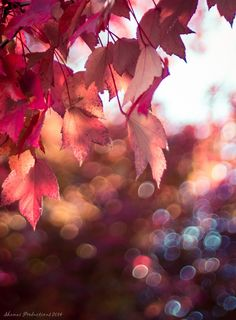 Bokeh by Miguel Martinez on 500px