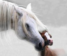 Horse momma and baby love