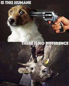 vraiment? vous ne voyez vraiment pas la différence ? devevez #végétalien #govegan