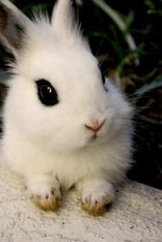 Adorable black and white bunny.