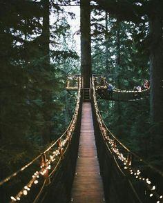grafika light, nature, and bridge