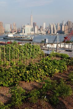 That's what I call a city allotment. annie novak « the selby