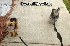 Hee hee hee. This gave me a smile. #funnydoglaughter