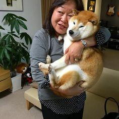 かりん&華 Japanese Dog Breeds, Japanese Dogs, Cute Puppies, Cute Dogs, Random Acts, Faith In Humanity, Shiba Inu, Akita, Hot Dog