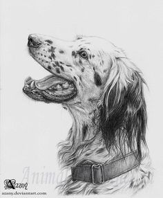 How to draw with a pencil a dog of breed the English setter 15