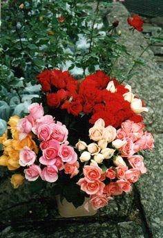 Flores de Finados...