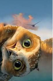 Image result for phone wallpaper owl