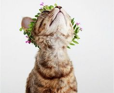 Cats at weddings! 19 amazing photos of cats making weddings awesome. Animals And Pets, Baby Animals, Cute Animals, Crazy Cat Lady, Crazy Cats, I Love Cats, Cute Cats, Funny Cats, Gatos Cats